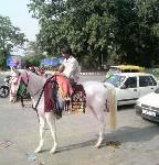 インドの馬車