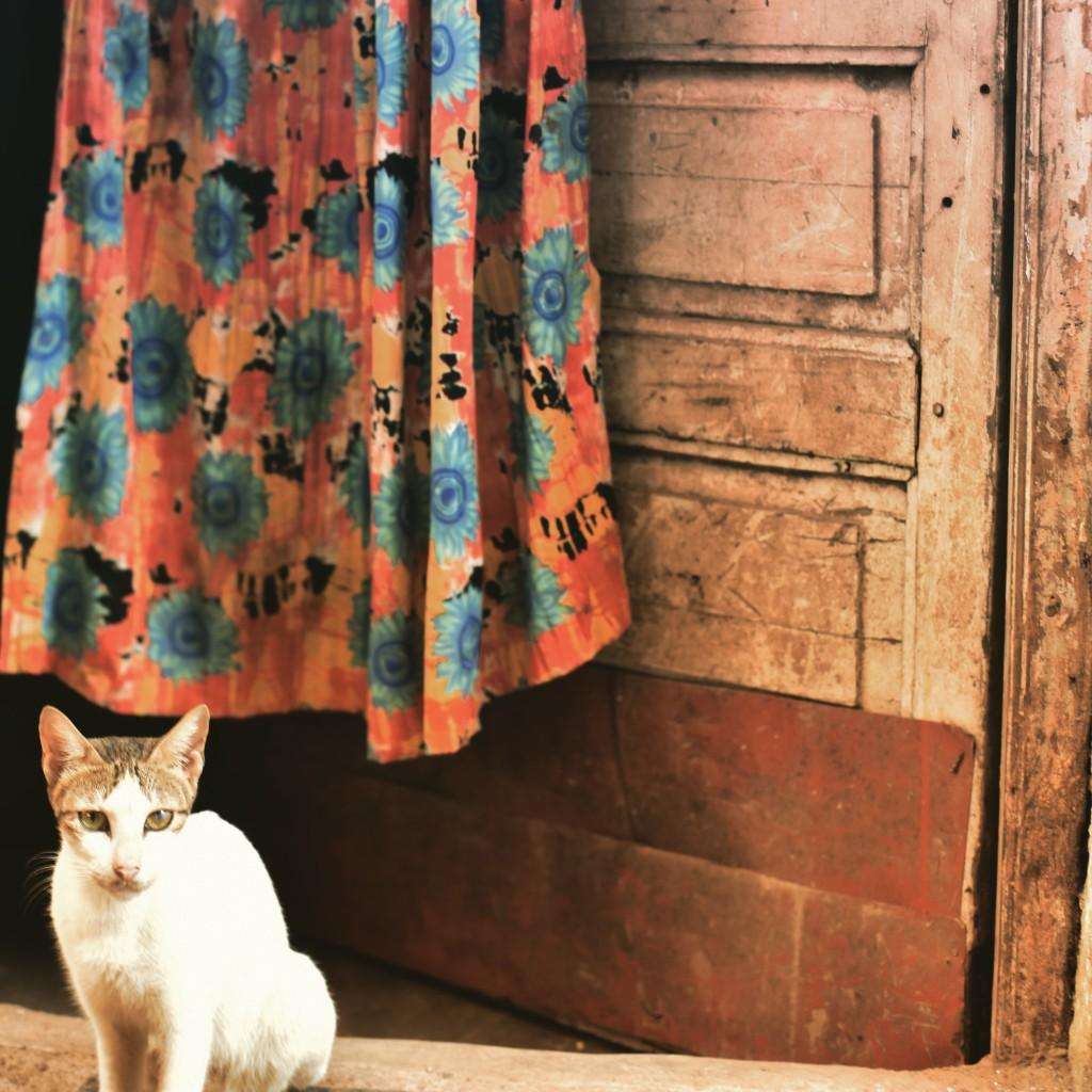 マヒム地区の猫